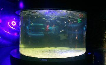 アクリル魚タンク